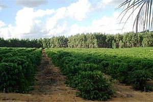 Uma área rural em Vila Valério também está em oferta e o lance mínimo é R$ 750 mil