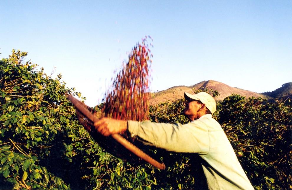 Fim da colheita de café contribuiu para geração de emprego tímida. Crédito: Divulgação