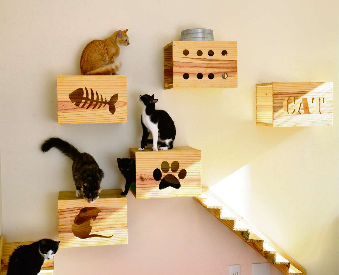 Casa adaptada para gatos como deixar o ambiente mais - Casa para gato ...