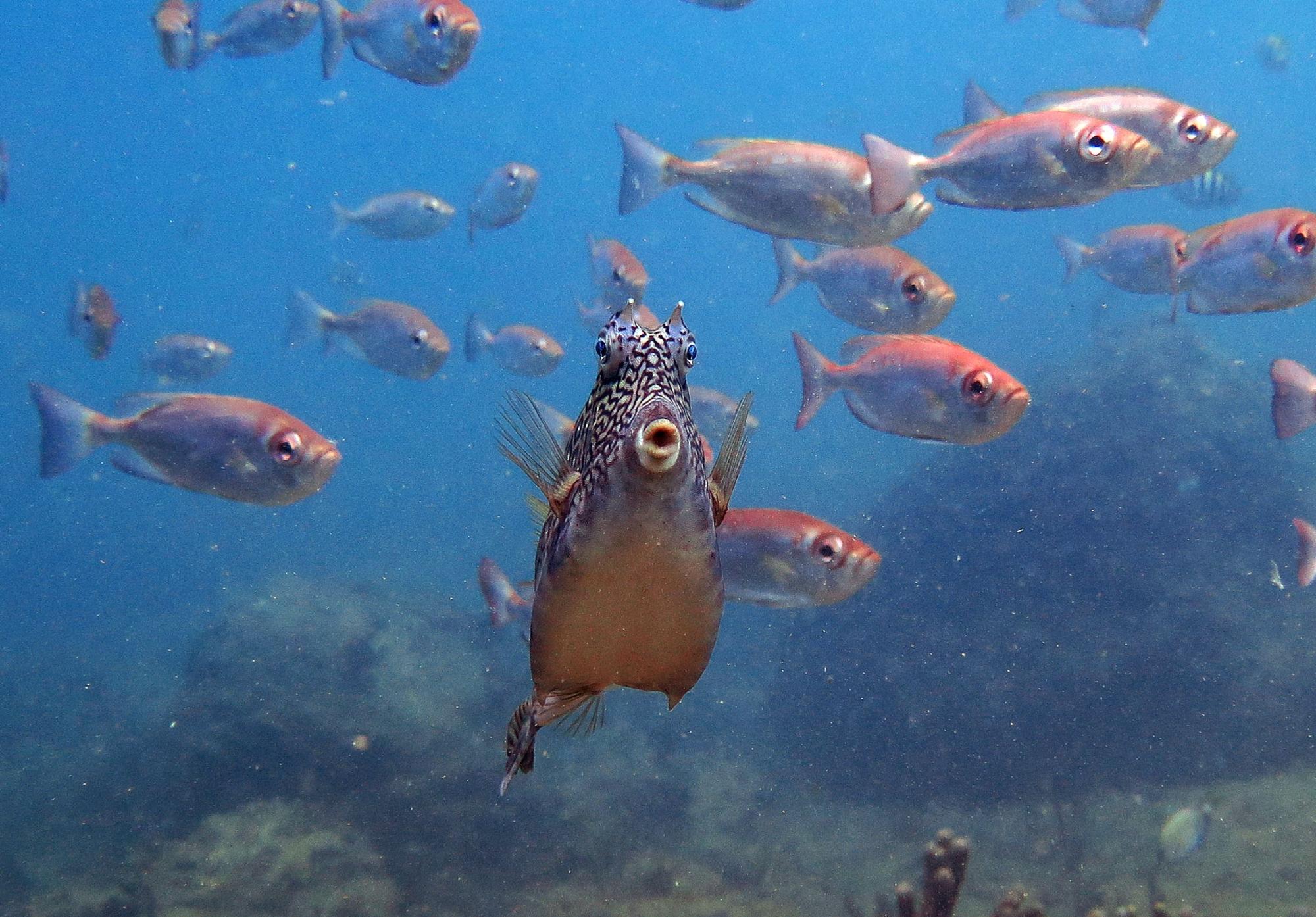 Mergulho nas Ilhas Rasas, em Guarapari