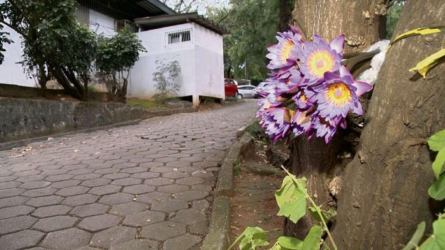 Buquê de flor de lótus colocado no estacionamento da Hucam, onde a  médica Milena Gottardi Tonini Frasson foi assassinada. Crédito: TV Gazeta
