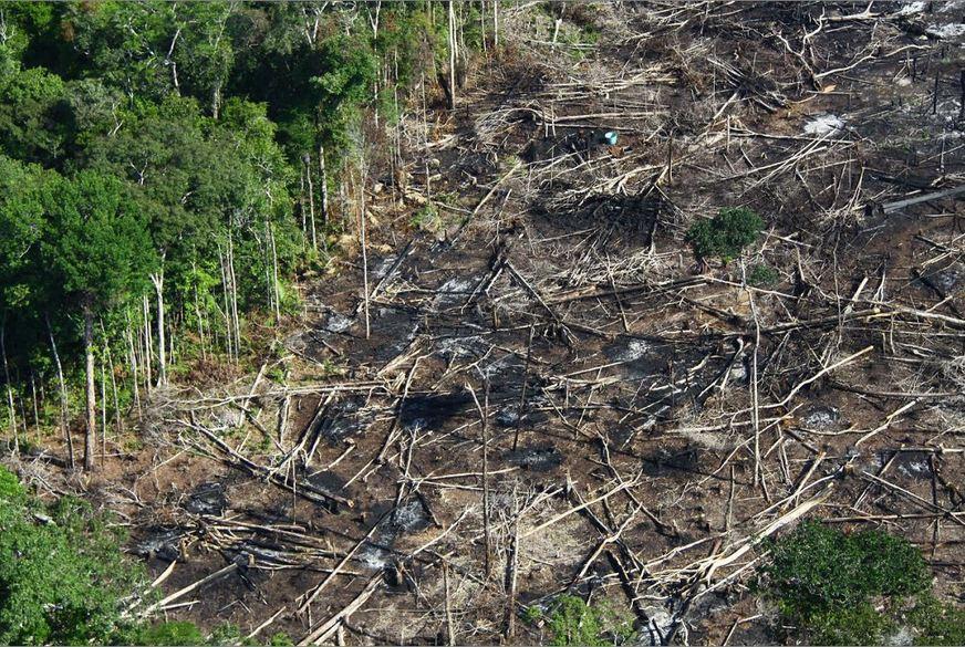 O desmatamento em julho cresce 278%. Crédito: Maria Silane Souza da Silva