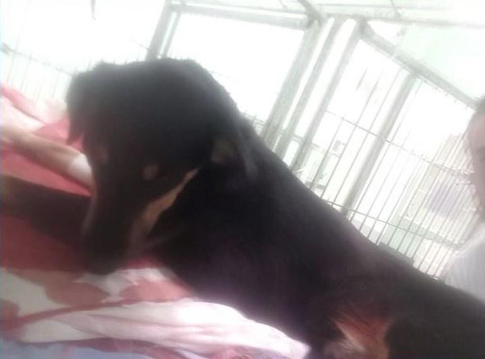 Cachorro morreu após ser baleado pelo dono. Crédito: Wando Fagundes/ TV Gazeta