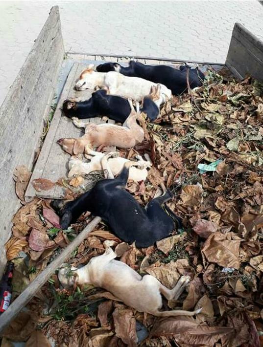 Cachorros apareceram mortos no interior de Pancas. Crédito: Internauta