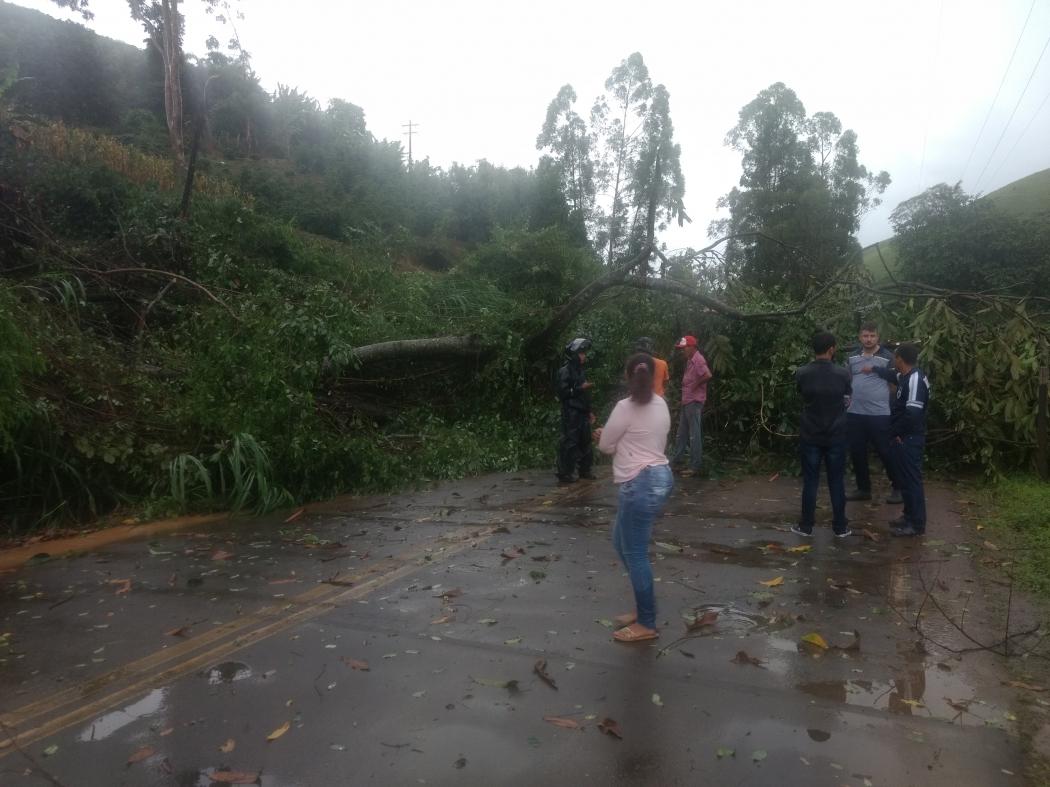 Queda de árvore deixou rodovia interditada em Muniz Freire. Crédito:  Jean Max
