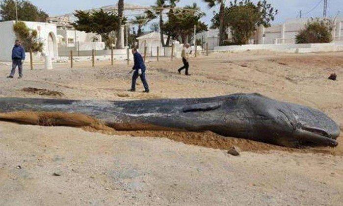 Animal era um jovem adulto com cerca de dez metros de comprimento. Crédito: Região Autônoma de Múrcia