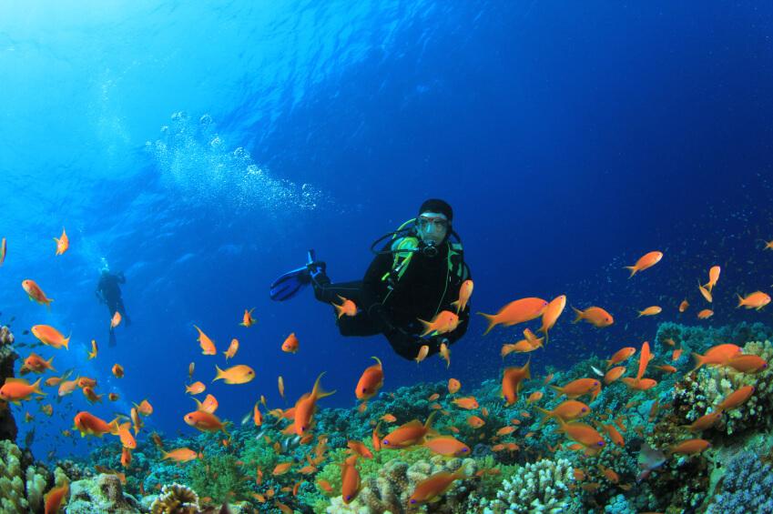 Imagem ilustrativa: pessoa faz mergulho. Crédito: Grupo Ecoturismo/Divulgação