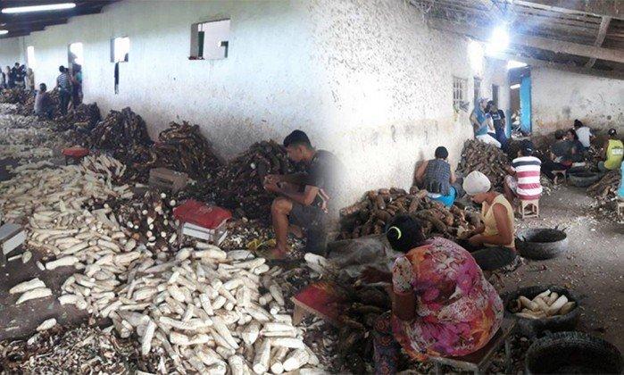 Crianças foram flagradas trabalhando em casa de farinha