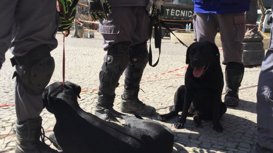 Ontem por volta das 14h a cadela Vasty identificou um sinal de vítima no setor 1. Crédito: Twitter   @BombeirosPMESP