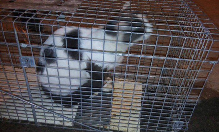 Gato resgatado em prédio que será demolido