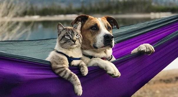 Cão e gato: como acompanhar a saúde renal . Crédito: Reprodução/ Instagram