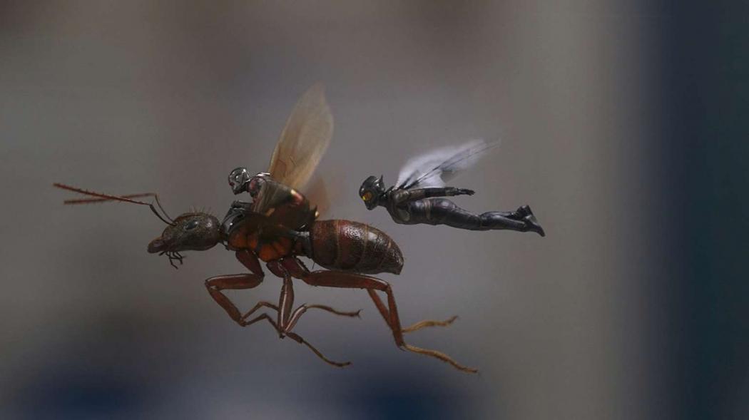 """Cena do filme """"Homem-Formiga e Vespa"""". Crédito: Disney/Divulgação"""
