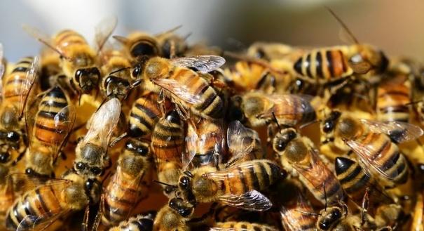 Estudo mostra que produtos químicos comprometem busca de alimento pelos insetos