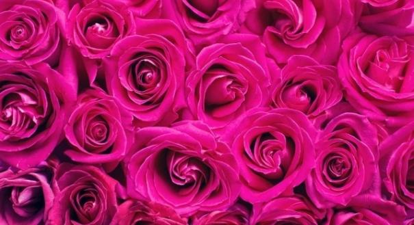 O rosa choque é a cor mais antiga encontrada na natureza, diz estudo