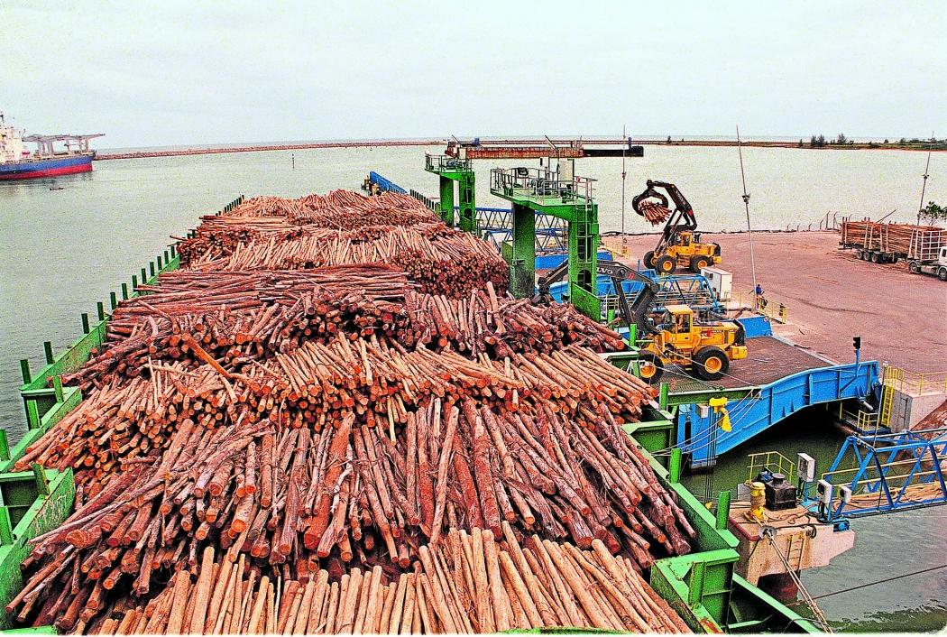 Toras de eucalipto chegando em Portocel, no município de Aracruz, para abastecer unidade da Suzano. Crédito: Carlos Alberto da Silva/Arquivo
