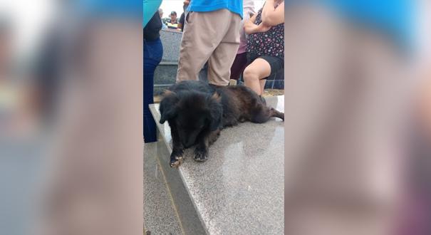 Cadela durante sepultamento da dona em Rio Bananal. Crédito: Vera Lúcia Soela | Internauta