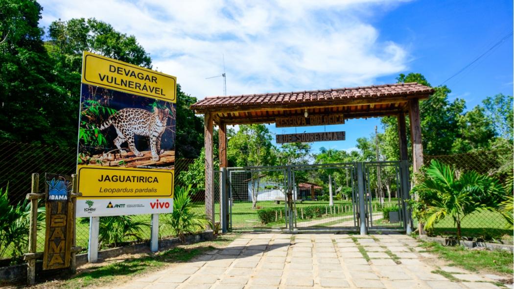 A Reserva Biológica de Sooretama, criada em 1941, é a área protegida mais antiga do Espírito Santo e está entre as mais antigas do Brasil. Crédito: Reserva Biológica de Sooretama