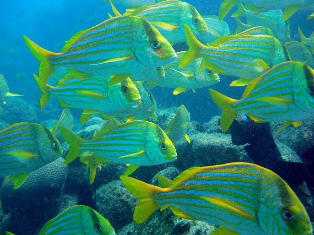 Peixes, arraias e tartarugas são atrativos em Abrolhos. Crédito: Divulgação/ Pousada Casa de Maria