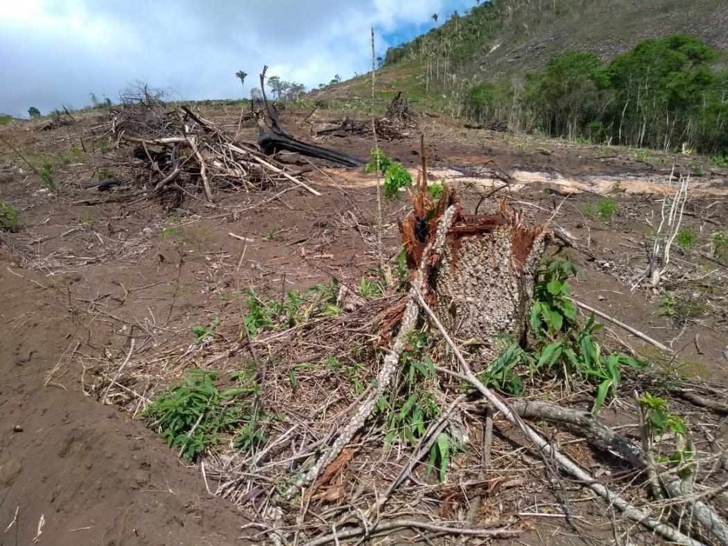 Desmatamento. Crédito: Divulgação/IDAF