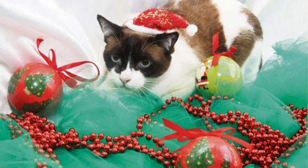 O natal também é dos pets