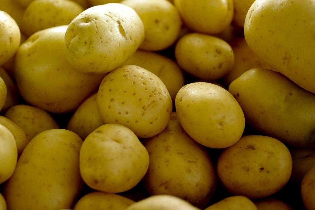 A batata foi a hortaliça que apresentou as maiores cotações na maioria das Centrais de Abastecimento (Ceasas) analisadas, em novembro. Crédito: Arquivo   Agência Brasil
