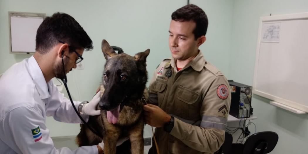 Cachorra Beck, que trabalhou juntos dos bombeiros no resgate em Brumadinho, passa por exames no Hospital Veterinário da UNESC. Crédito: Larissa Avilez